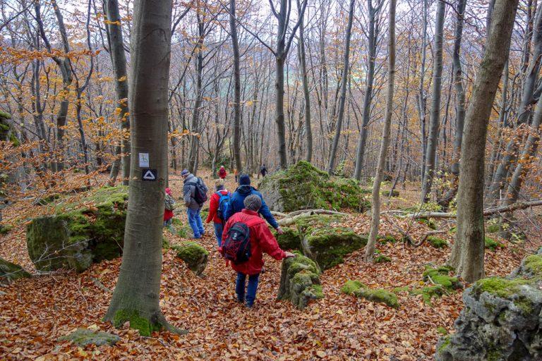 Wir kraxeln über unebene, felsige Waldpfade