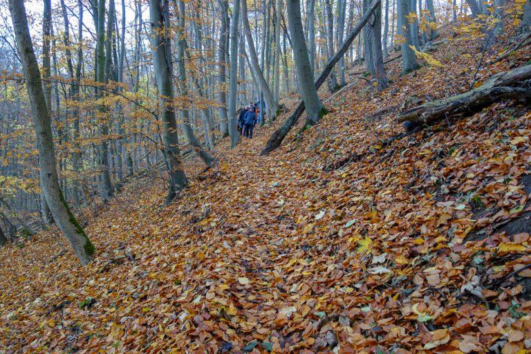Abwärtsführender Weg durch den Thüster Berg