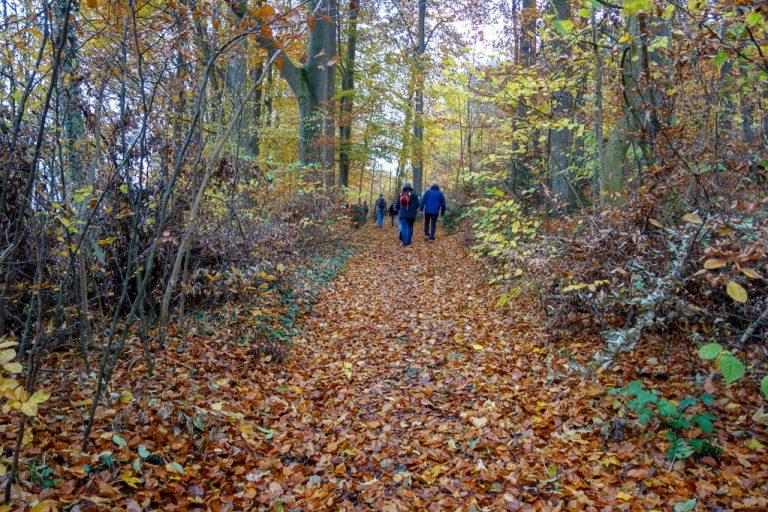Herbstlicher Waldweg auf dem Thüster Berg