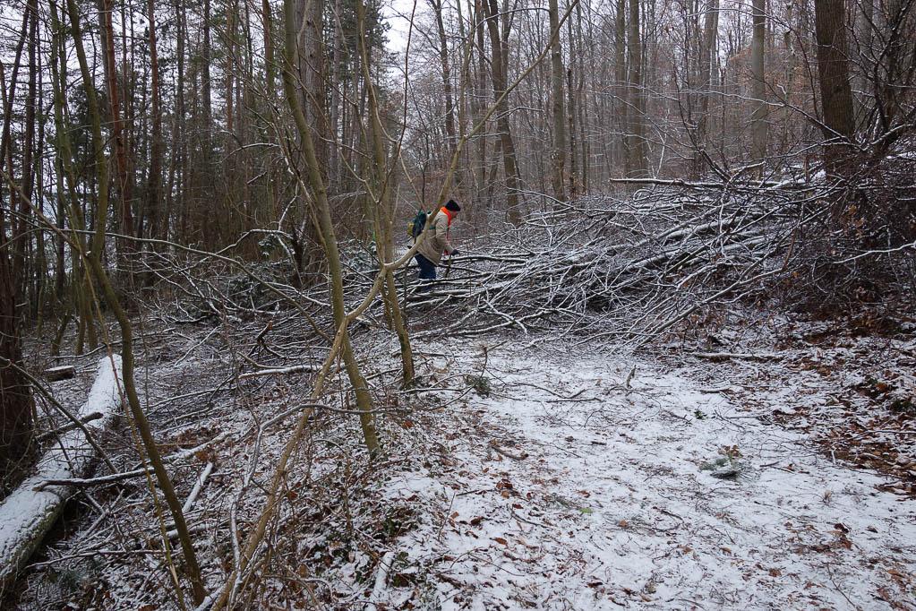 Mehrmals versperren gefällte Bäume unseren Weg - wir umgehen ihn oder kraxeln mitten durch