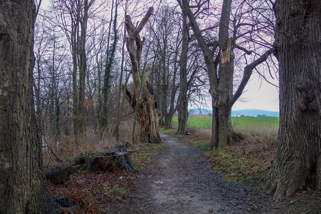Fußweg Friedhof - Banteln