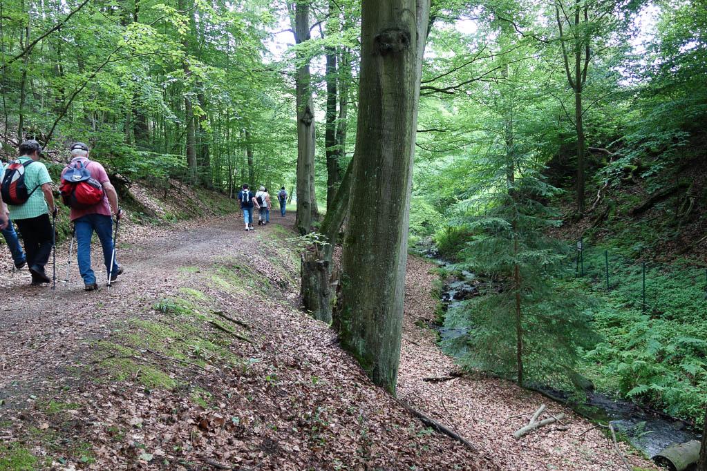 Weg entlang am Bach, der Grünenplaner Wasser genannt wird