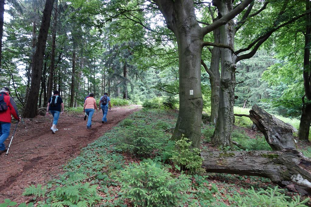 Wir folgen dem Logo vom Ith-Hils-Weg, das gut sichtbar an Bäumen angebracht ist