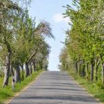 Obstbaumallee